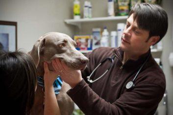 Millwood Animal Hospital