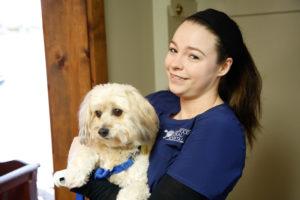 Tesha Millwood Animal Hospital Springfield MO